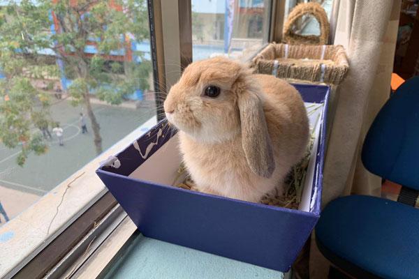 Thỏ cảnh mini có tắm được không? Cách chăm sóc vệ sinh cho thỏ