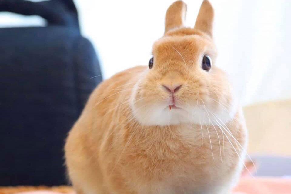 Nguyên nhân thỏ biếng ăn và cách xử lý khi thỏ biếng ăn