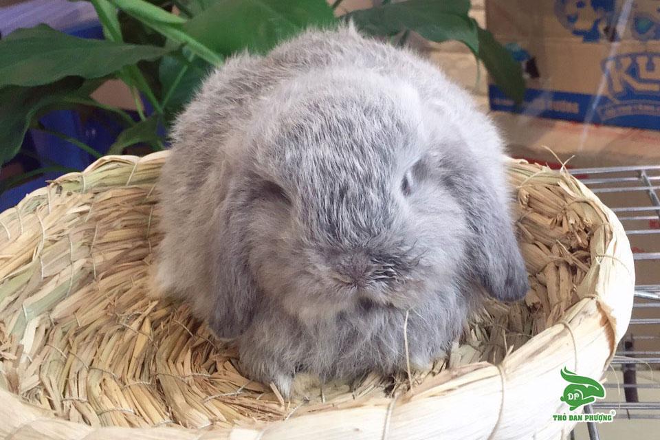Bảng giá dịch vụ cho Thỏ Cảnh tại Shop Thỏ Cảnh Mini tại Hà Nội – Thỏ Đan Phượng