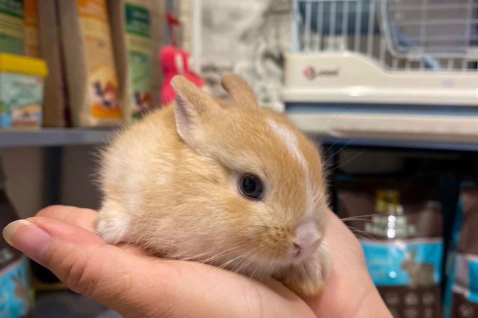 Cách xử lý hồi sức cho thỏ trong mùa nắng nóng