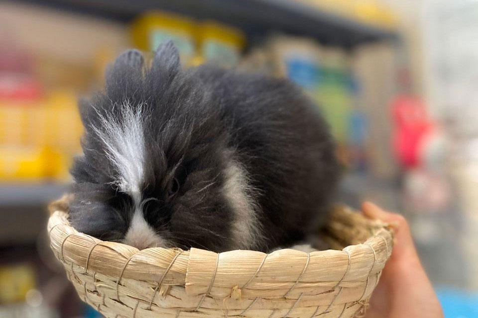 Cách chống nóng cho thỏ cảnh mini